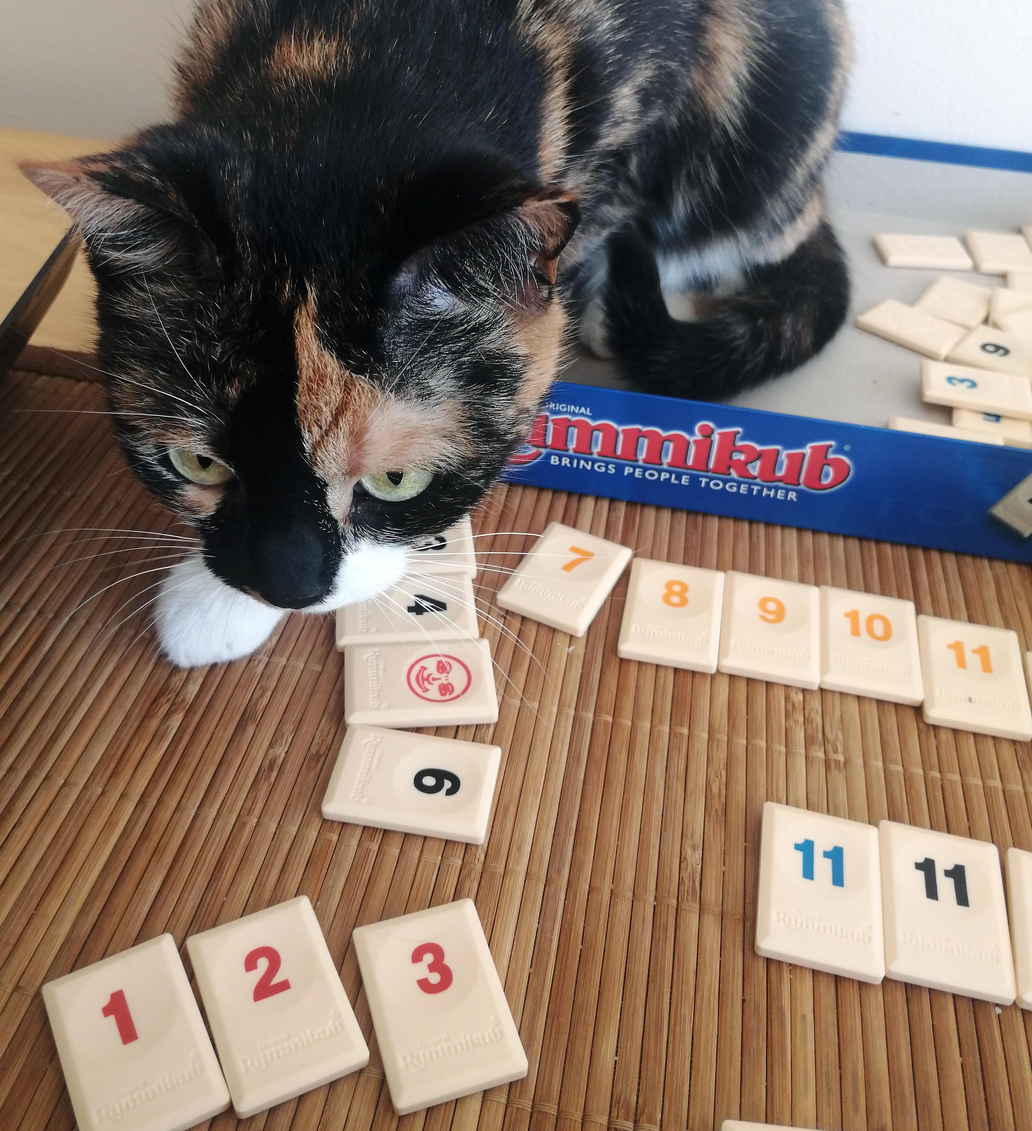 gra liczbowa rummikub